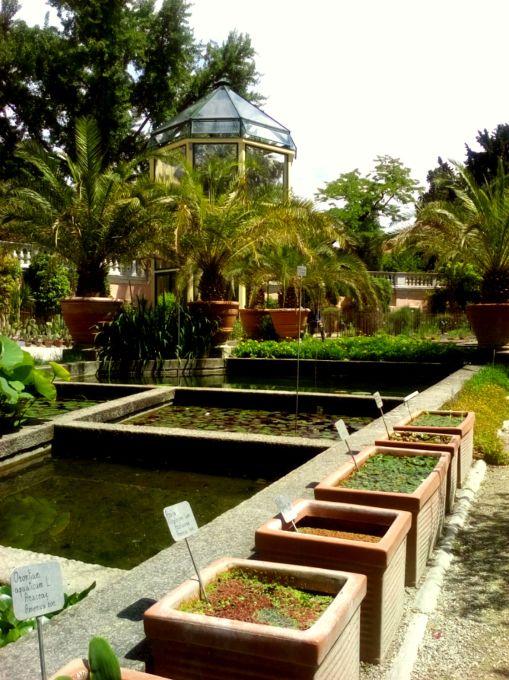 palma Goethe piante acquatiche