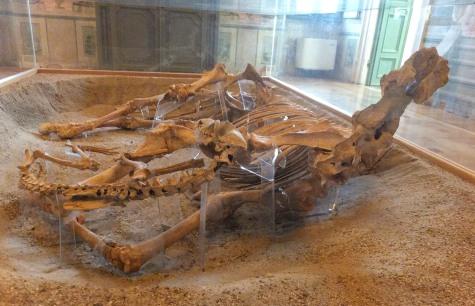 Cavallo con due levrieri, al Museo Archeologico di Povegliano Veronese